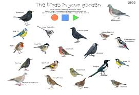 British Garden Birds Chart Pin By Chelsey Dubois On Birds British Birds