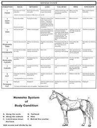 Weight Scoring Your Horse Bang For Your Buck Horsegear