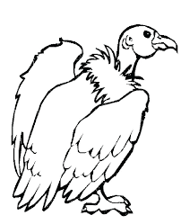 desert animal coloring pages desert animal coloring pictures in