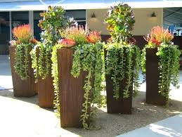 potted trees for patio outdoor potted trees potted trees for patio privacy tall plants home outdoor