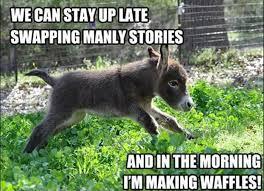 donkey funny quotes waffles dump a day donkey funny quotes waffles