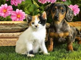 Cats And Dogs Spring Wallpapers - Wallpaper Cave