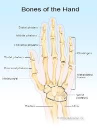 Hand Injuries Types Of Common Injuries Trauma