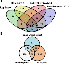 Pumpkin Venn Diagram Comparing Phloem Exudate Proteomes A Venn Diagram