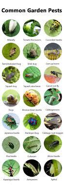 Best Sure-Shot Organic Pest Control Approaches Every Gardener ...