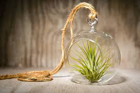 Amazon.com: Hinterland Trading Hanging Glass Globe Terrarium with Air Plant  Sweet Little House Plant for Home or Office: Garden & Outdoor