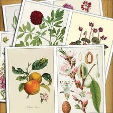 floral decoupage furniture. Image Is Loading 8-Vintage-Victorian-Botanical-Illustrations-Decoupage- Furniture-iron- Floral Decoupage Furniture