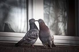 鳩 鳥 ペン Pixabayの無料写真