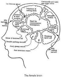 the brain wiring test learning english in advanced levels picresized 1209105195 male brain jpg picresized 1209105085 female brain jpg
