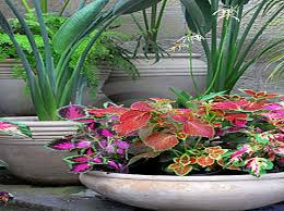 Pot Decoration Designs Accessories Gardening Flower Pots Decoration Ideas With Coleus 89