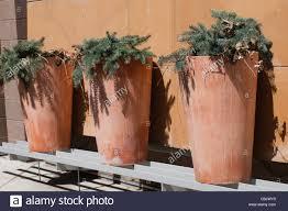 tall terracotta planter. Brilliant Planter Tall Terracotta Planter With Evergreen  Stock Image Intended Terracotta Planter L