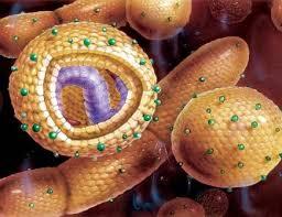 Инфекционные заболевания классификация эпидемиология лечение и  Инфекции Организмы которые вызывают инфекционные заболевания