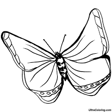 Symmetrical Butterfly Coloring Page New Important Butterfly Coloring