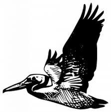 Vliegende Pelikaan Vector Gratis Download