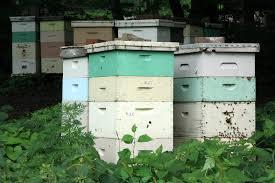 Αποτέλεσμα εικόνας για beehive