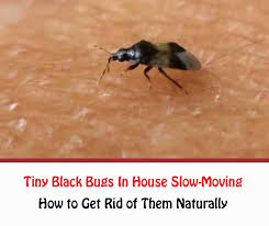 how to get rid of small mites in bathroom