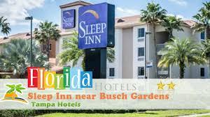 sleep inn near busch gardens usf tampa hotels florida