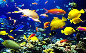 Fish Backgrounds Tropical Fish Backgrounds Wallpaper Cave