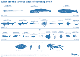 Whale Size Chart This Amazing Chart Shows How Big The Biggest Animals In The