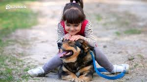 Dog Best Friend Quotes Delectable 48 Surprising Benefits Of Having A Dog You Didn't Know About