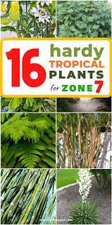 best hardy tropical plants for zone 7