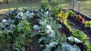 Kitchen Garden Vegetables Growing A Fall Heirloom Vegetable Garden 2012 3 Youtube
