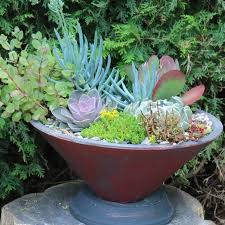 16 creative succulent garden ideas