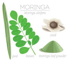 11 Surprising Facts About Moringa And How It Can Improve