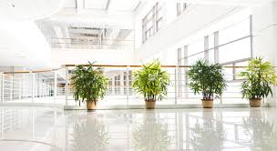 office indoor plants. GardaWorld\u0027s Indoor Plant Care Service Can Play An Important Role In Making Your Office A Healthy And Happy Space For Clients Employees. Plants