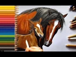horse drawing in color.  Drawing Colored Pencil Drawing Horse With Baby  Jasmina Susak Inside Drawing In Color