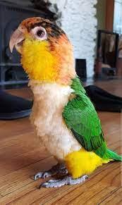 Our little Lola bird ♥ : ntbdbiwdfta