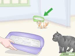 eliminate cat odors around the house