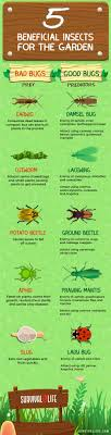 beneficial insects in the garden for good bugs vs bad