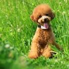 Купить gps ошейник для собак на алиэкспресс