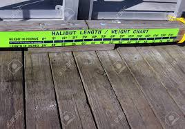 Halibut Weight Chart Neon Green Halibut Chart Is Affixed To The Wooden Wharf At Valdez