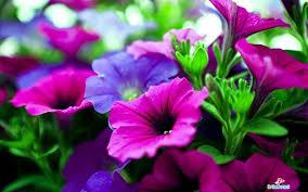desktop wallpaper flowers high resolution. Exellent High Flower High Resolution Wallpaper And Desktop Flowers N