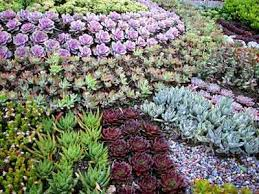 Small Picture Succulent Garden Designs Monumental Landscaping Design With