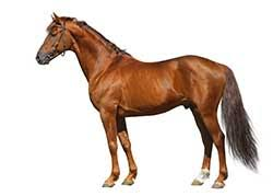 horse definition and meaning collins