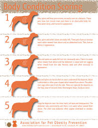 Diets For Cavalier King Charles Spaniels