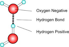 Hydrogen Bonding Hydrogen Bond