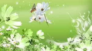 Wild Flowers Green HD desktop wallpaper ...
