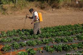 urbanization essay a visual essay on agrarian change around mumbai  a visual essay on agrarian change around mumbai and pune rural a strawberry farmer in the