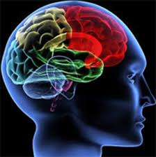 Image result for brain definition biology