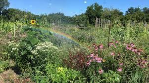 vermont community garden network thriving garden grants available