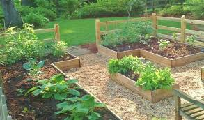 beginner vegetable garden. Contemporary Vegetable Our Family Vegetable Gardenu2026In The Beginning For Beginner Garden N