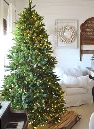 King Fraser Fir Quick-Shape Christmas Tree | King Of Christmas