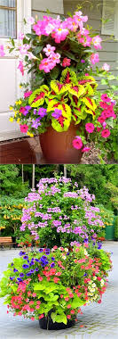 how to plant a flower garden. Celebrate The Abundance Of Colors With Flower Gardening. How To Plant A Garden