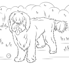 Small Picture Australian Labradoodle coloring page Free Printable Coloring Pages