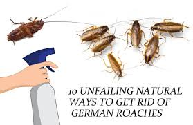 10 unfailing natural ways to get rid of german roaches baby cockroaches fast