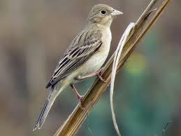oiseau Martin 25 janvier trouvé par Ajonc Images?q=tbn:ANd9GcQCgoch6PhyZxdmZlT25gmFJrQ_yK4chbE5qQ&usqp=CAU